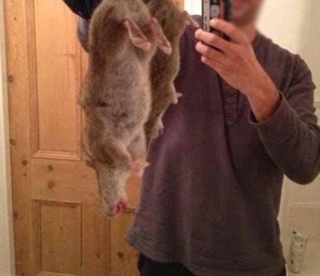 Τεράστιοι... υπερ-αρουραίοι σκορπούν τον τρόμο στη Βρετανία (pics)