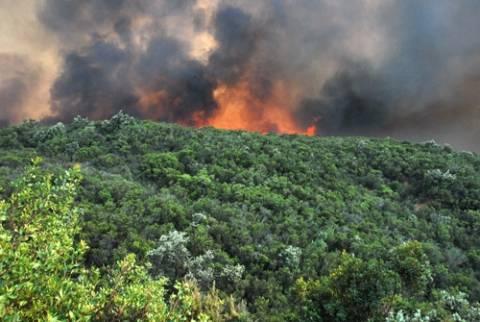 Μαίνεται η πυρκαγιά στην Μαλεσίνα