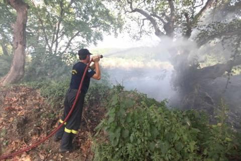 Υπό μερικό έλεγχο η φωτιά στο Πολυδένδρι Αγιάς