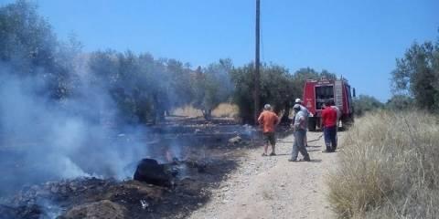 Ξάνθη: Πυρκαγιά σε ελαιώνα στη Λεύκη και σε ξερά χόρτα στη Γενισέα