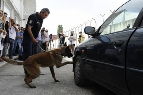 Θεσσαλονίκη: Σκύλοι-ανιχνευτές ψάχνουν λαθραία τσιγάρα σε τελωνεία