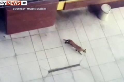 ΗΠΑ: Πούμα σκόρπισε τον τρόμο σε εμπορικό! (video+photos)