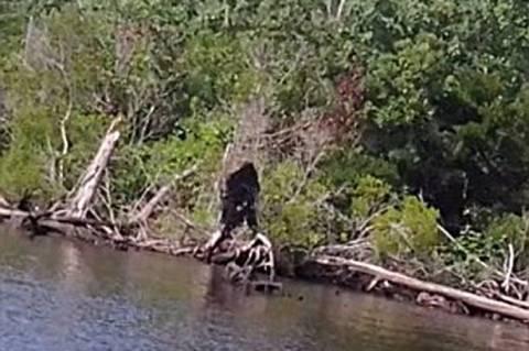 ΗΠΑ: Η πιο «καθαρή» φωτογραφία του Μεγαλοπόδαρου! (photos+video)