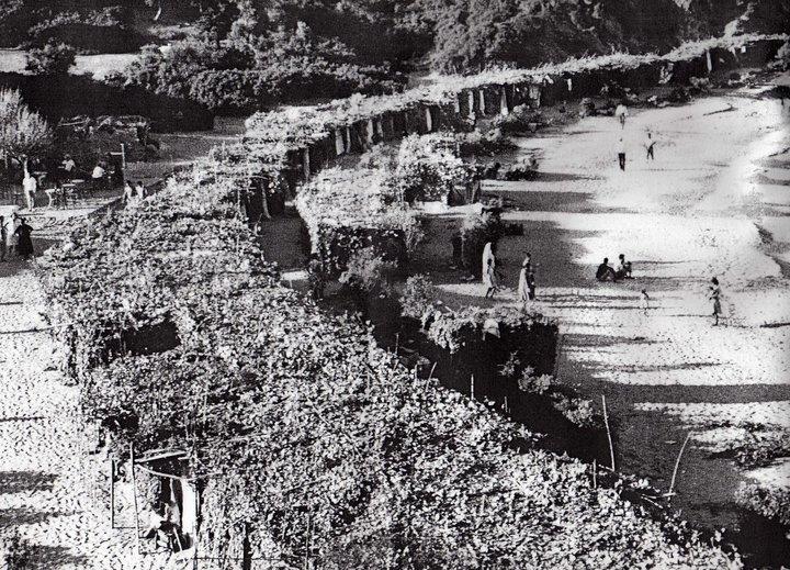 Κάλαμος: Η φωτογραφία του 1960 που κάνει θραύση στα socia media!