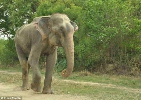 Απίστευτο! Ελέφαντας κλαίει με λυγμούς αφού ελευθερώθηκε! (pics+video)