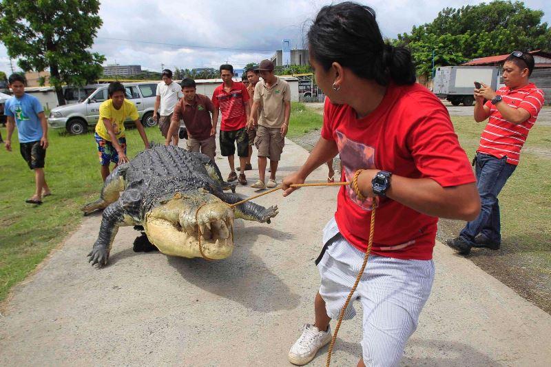 Φιλιππίνες: Τεράστιος κροκόδειλος προκάλεσε χάος σε αυτοκινητόδρομο! (photos)
