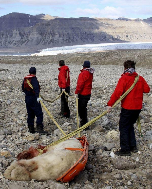 Νορβηγία: Πολική αρκούδα σκότωσε τουρίστα μαθητή! (photos)