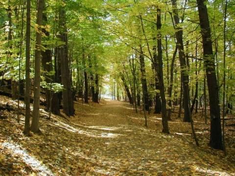 Αρκαδία: Απαγόρευση της κυκλοφορίας στα δάση