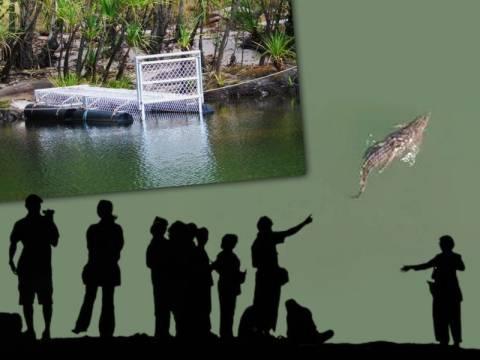 Ρέθυμνο: Ζητούν να μείνει ο «Σήφης», ο κροκόδειλος στη λίμνη για πάντα!