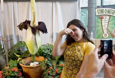 Λουλούδι με σχήμα... πέους φτάνει σε ύψος τα δύο μέτρα! (βίντεο)