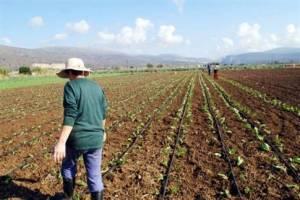 Νέοι και πτυχιούχοι γίνονται αγρότες