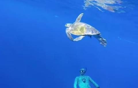 Θαλάσσια χελώνα λυτρώνεται από δύτη και... ανταποδίδει (vid)