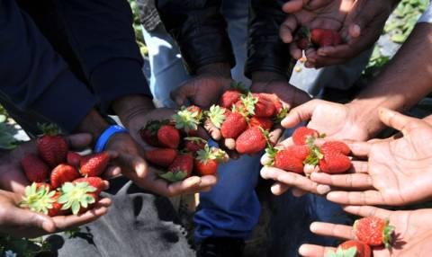 Συνεχίζεται η δίκη για τις «ματωμένες φράουλες»