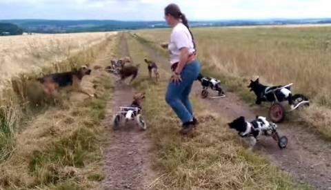 Σκυλιά με ειδικές ανάγκες παίζουν σε χωράφι (vid)
