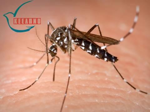 Ιός του Δυτικού Νείλου: Πώς να προφυλαχτείτε από τα κουνούπια
