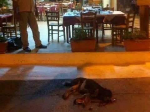 ΚΤΗΝΩΔΙΑ: Ιδιοκτήτης ταβέρνας σκότωσε σκύλο μπροστά στους θαμώνες!