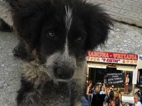 Η Μάγκυ έγινε «μάρτυρας» - Οργή για τη δολοφονία της σκυλίτσας στην Εύβοια