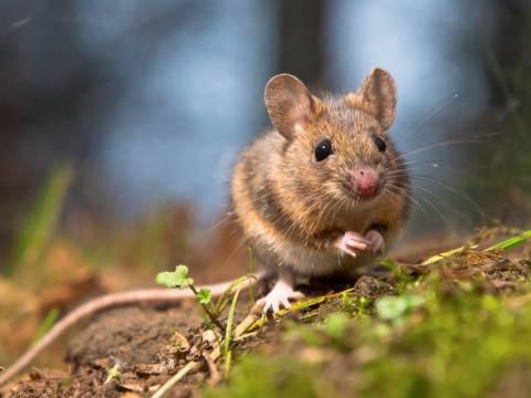 Τα μικρότερα ζώα παθαίνουν πιο εύκολα καρκίνο