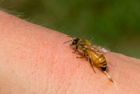Ηλεία: Παραλίγο να χάσει τη ζωή της από τσίμπημα σφήκας