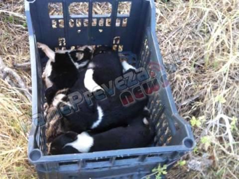 Πρέβεζα: «Ζώα» πέταξαν κουτάβια σε χαντάκι – Τέσσερα βρέθηκαν νεκρά (pics)