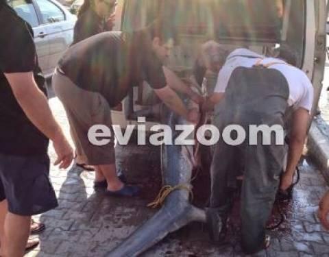 Αλιβέρι: Η ψαριά που κάνει θραύση στα social media (pics)