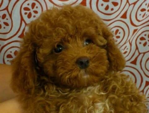 Αποδείχθηκε κι επιστημονικά: Οι σκύλοι είναι ζηλιάρηδες