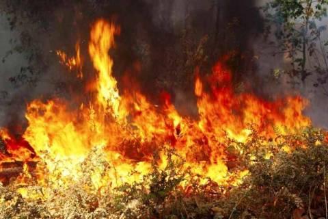 Μεσολόγγι: Πυρκαγιά κοντά στο Κρυονέρι