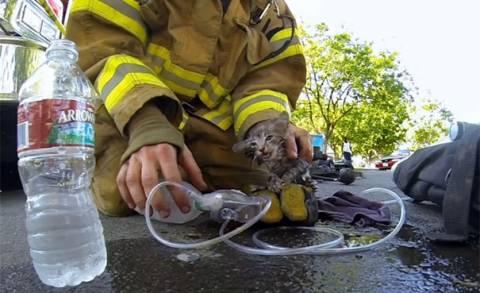 Χαμός στο διαδίκτυο με τον πυροσβέστη που σώζει γατάκι