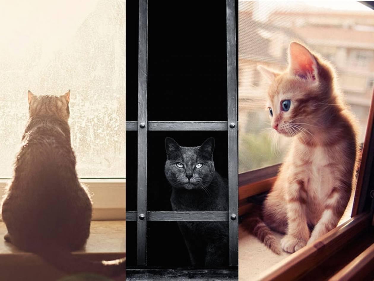 423d55754317 Γάτες που περιμένουν τους ανθρώπους που τις φροντίζουν - Newsbomb