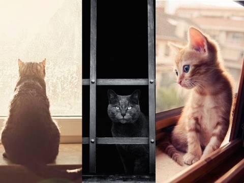 Γάτες που περιμένουν τους ανθρώπους που τις φροντίζουν