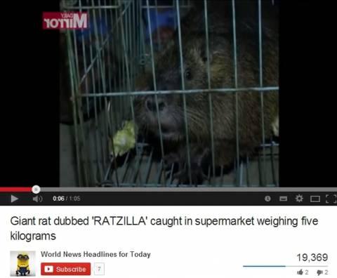 «Συνελήφθη» ένας τεράστιος αρουραίος μέσα σε... σούπερ μάρκετ! (βίντεο)