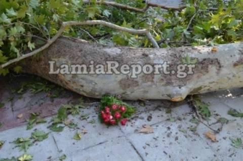 Λαμία: Θρήνος στην κηδεία του 9χρονου Μπάμπη (video+photos)