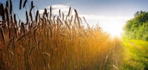 Μυστήριο με περίτεχνα αγρογλυφικά σε Ρωσία και Γερμανία! (videos)