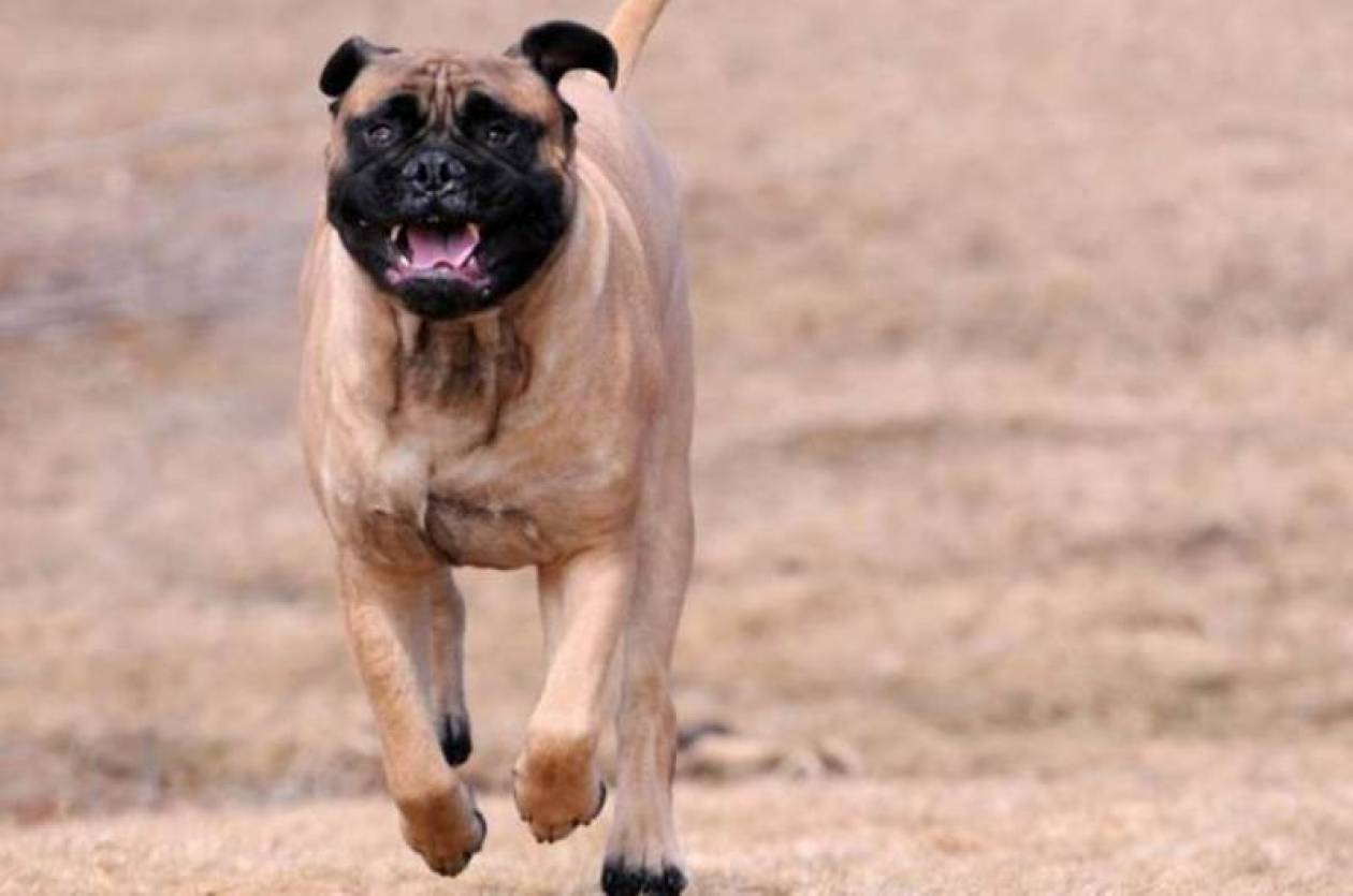Κίνα: Σκύλος τού ξερίζωσε τον… ανδρισμό! (photo)