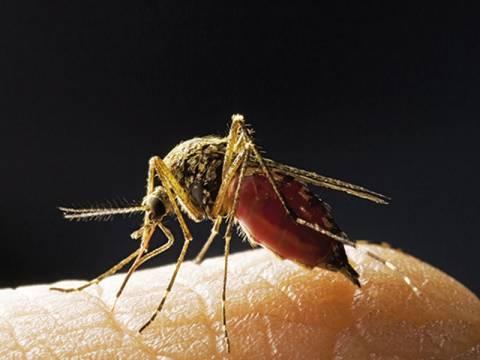 Φτιάξτε οικολογικές παγίδες για τα κουνούπια και τσιμπήματα (τέλος)