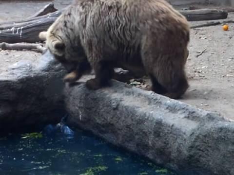 Медведь спас ворону, вытащив ее из воды
