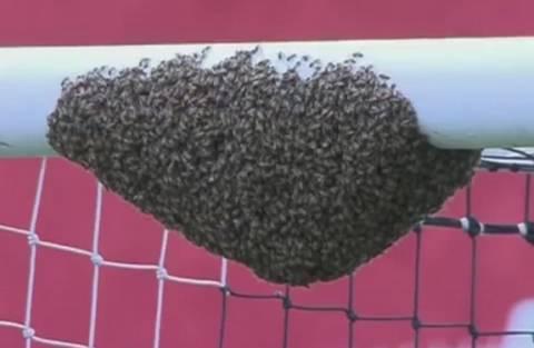 Пчелы приостановили футбольный матч в ЮАР