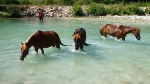 Η βροχή έσωσε τα 9 άλογα μετά την κτηνωδία στον Αχέροντα