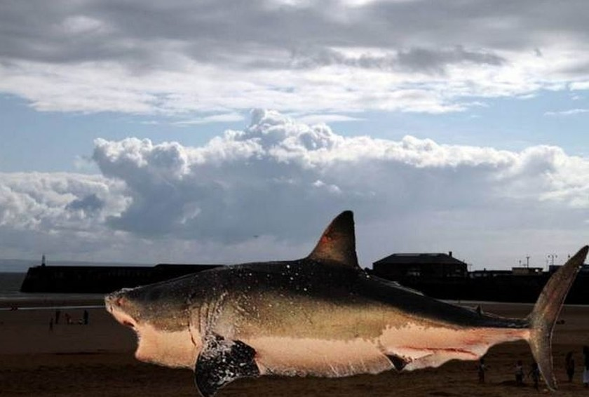 Shark appeared in the... sky (pics)