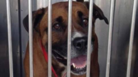 ΗΠΑ: Σκύλος της οικογένειας τού ξέσκισε τα γεννητικά όργανα