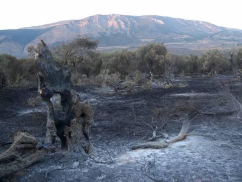 Ελαιώνας Άμφισσας: Κάηκε πέρυσι και τους ζητάνε να πληρώσουν ΕΝΦΙΑ (vid)