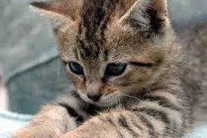 Γιατί γέμισε το Facebook και τα social media με... γάτες;