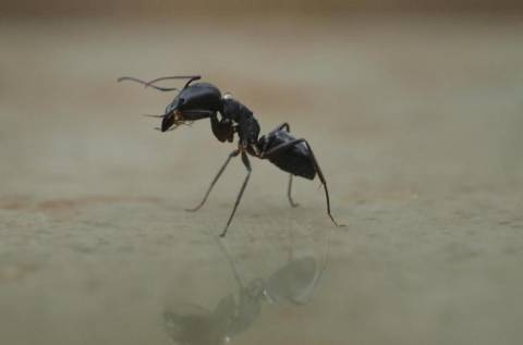 Πήγε να κάψει φωλιά μυρμηγκιών κι έκαψε το... σπίτι του!