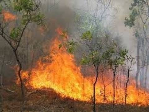 Ρέθυμνο: Σε εξέλιξη πυρκαγιά στο Γερακάρι
