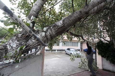 Νεκρός 50χρονος - Καταπλακώθηκε από δέντρο που έκοψε
