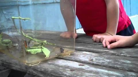 Η απίθανη αντίδραση ενός αγοριού όταν μια πεταλούδα κάθεται στο πρόσωπο του (Vid)