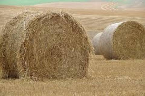 Κλέβουν ακόμα και σανό από τα χωράφια!