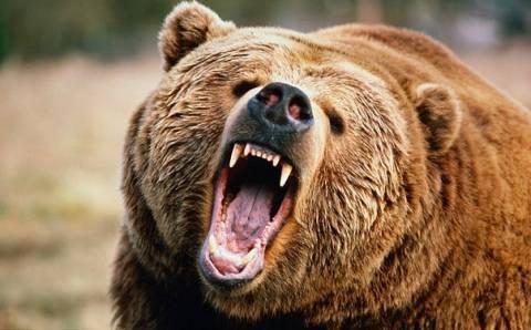 Περιπέτεια για κτηνοτρόφο που δέχθηκε επίθεση από αρκούδα