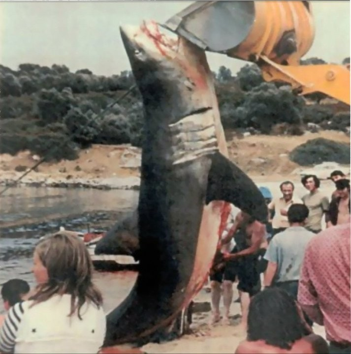Επιθέσεις καρχαριών στην Ελλάδα