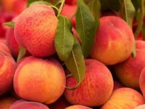 New measures of the European Commission for peach producers